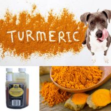 TurmerTinc! Turmeric for dogs